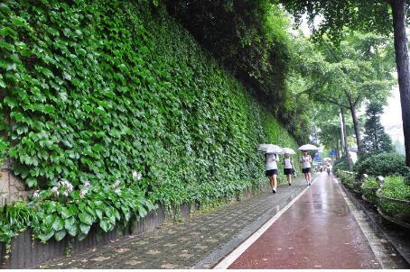 도봉구 서울창원초등학교 맞은편 벽면녹화 조성지