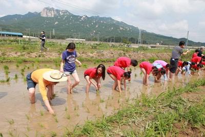 풍성한 수확 기대하며 아이들 도심서 손 모내기